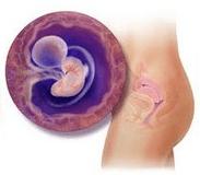 6ª semana de gravidez